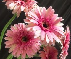 花選びの楽しみ方