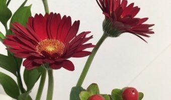 冬を彩る温かみのあるお花